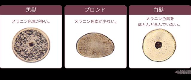 メラニン色素